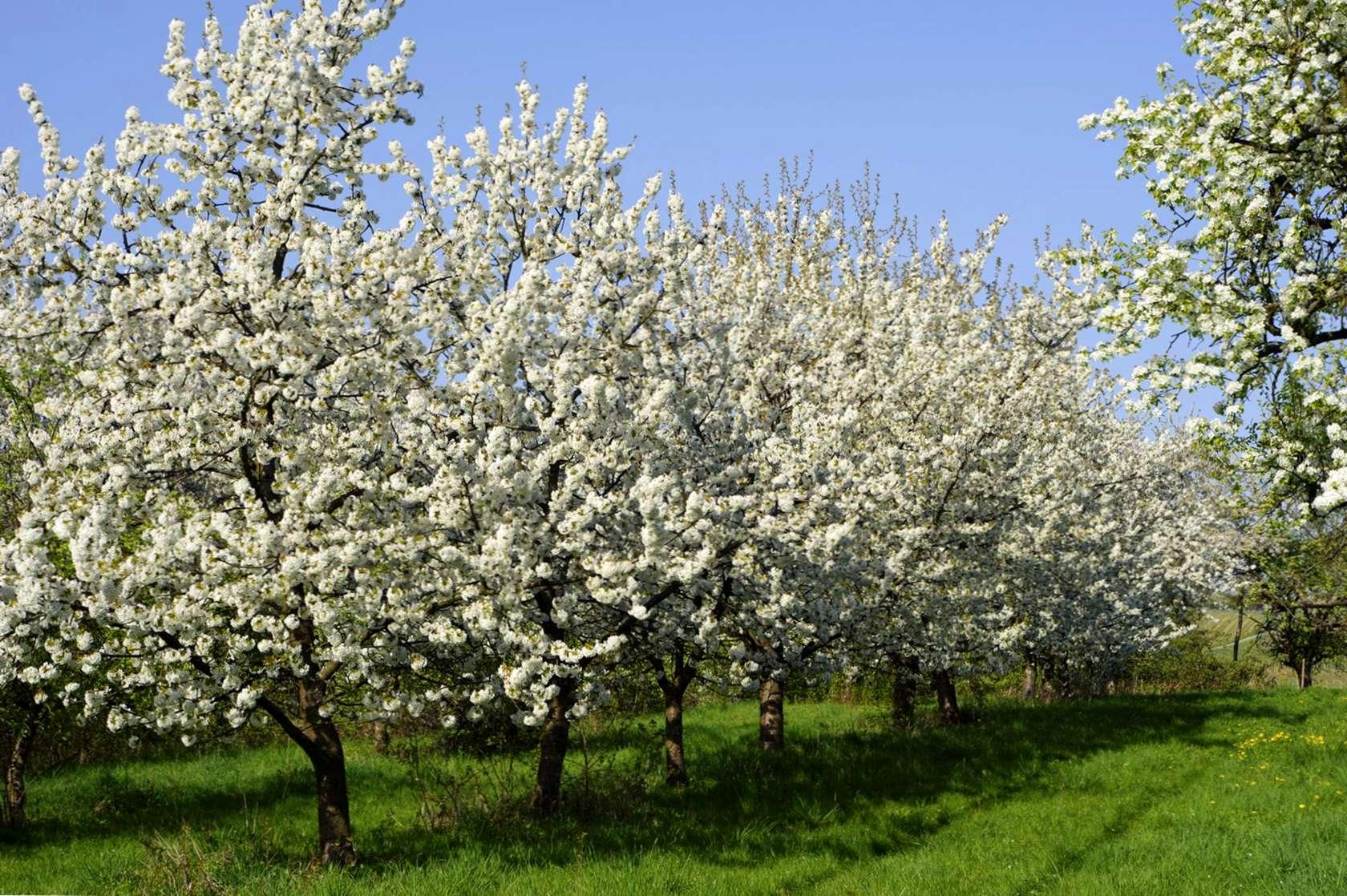 Foto Di Alberi Da Frutto spaziatura dell'albero da frutto: quanto distanti piantate