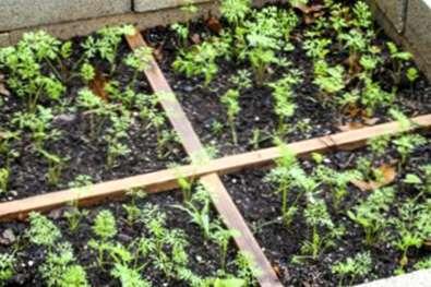 Garten Layout Plane Tipps Zu Layout Optionen Fur Den Garten
