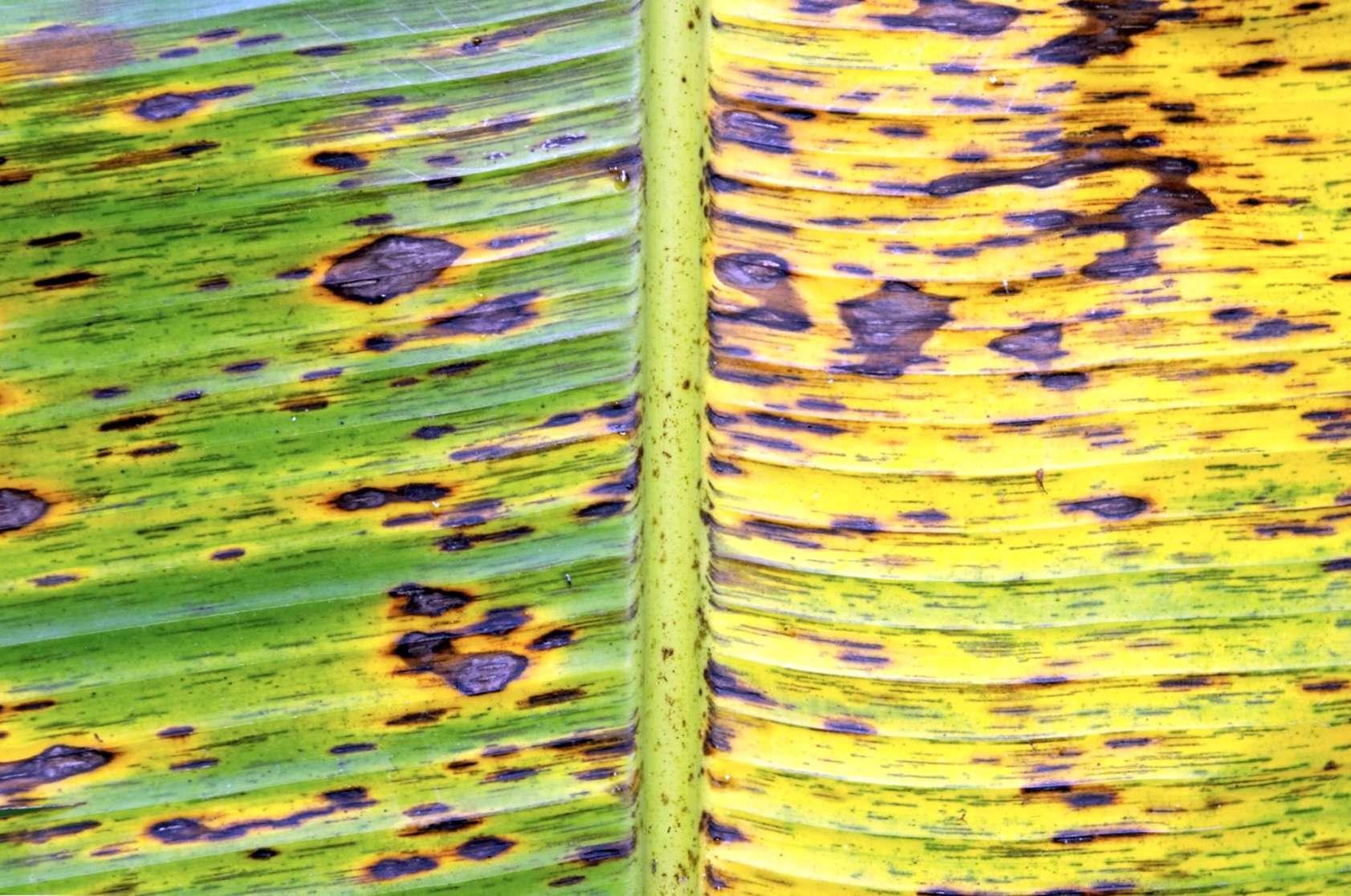 malattie causate da parassiti nelle piante