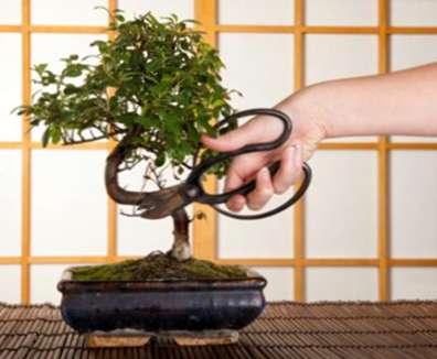 Outils de jardin japonais essentiels: Différents types d\'outils ...
