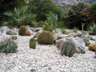 Come Costruire Un Giardino Di Ghiaia : Piante da giardino di ghiaia scopri come realizzare un giardino di