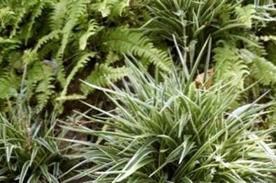 Pflege Von Spider Pflanzen Im Freien Wie Man Eine Spinne Pflanze