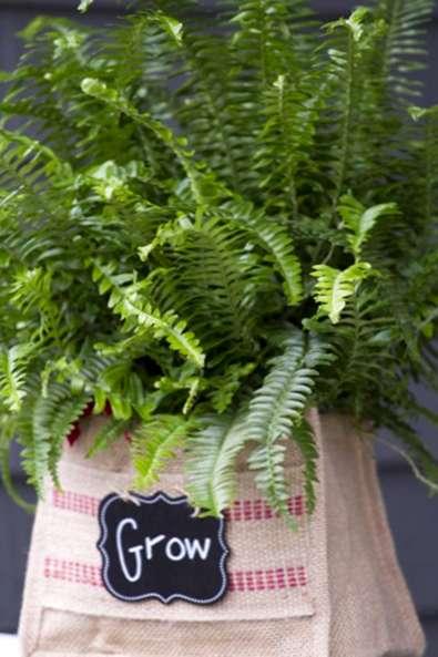 Fertilizing Indoor Ferns Comment Nourrir Vos Fougeres En Pot D