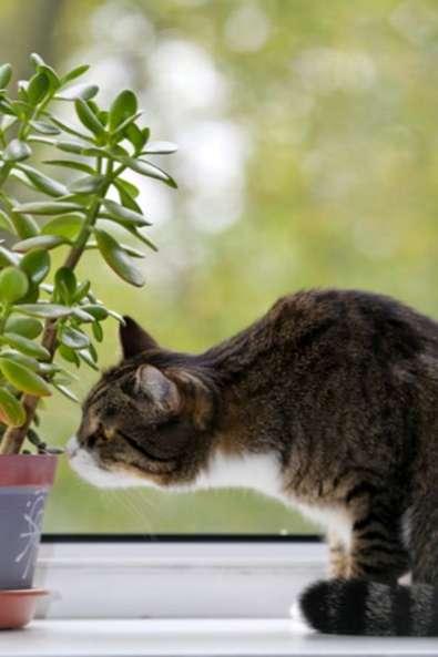 Piante Da Appartamento E Gatti.Detergente Per Gatti Protegge Le Piante Dai Gatti It