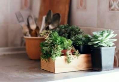 Piante da appartamento: quali piante crescono meglio nelle cucine ...