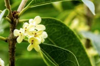 Cespuglio Fiori Bianchi Profumati.Migliori Arbusti Profumati Scopri Gli Arbusti Che Hanno Un Buon