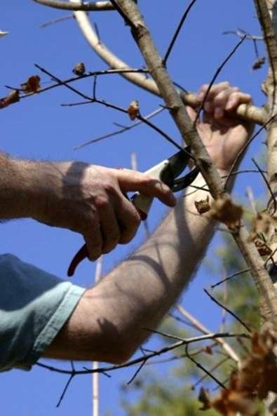 Kalte Schaden An Baumen Beschneiden Winter Beschadigte Baume Und