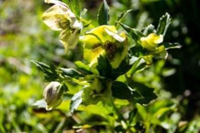 piante malate