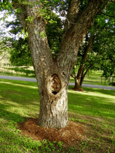 F 252 Lll 246 Cher In Baumst 228 Mmen Wie Man Ein Loch In Einem