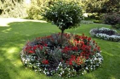 Ring Garden Design - Plantation de jardins autour des arbres ...