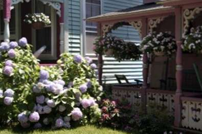 sun tolerant hortensien w rme tolerante hortensien f r g rten. Black Bedroom Furniture Sets. Home Design Ideas