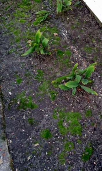 Tipps Um Moos Im Garten Und Auf Dem Rasen Loszuwerden