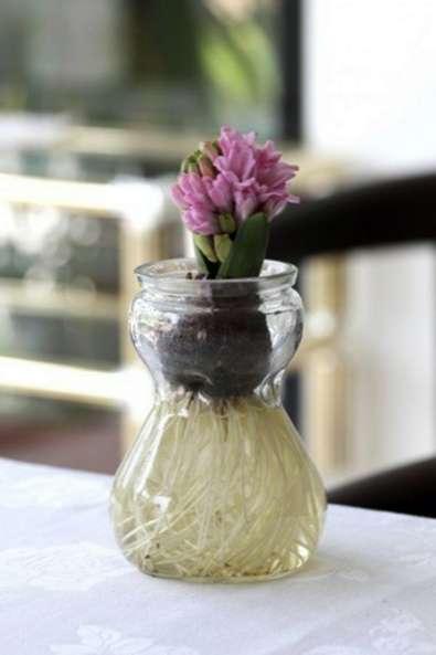 Bulbi In Vaso Di Vetro.What Is A Bulb Jar Bulb Vaso Info For Force Flowers It