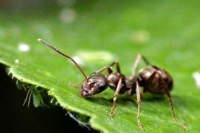 Cómo me deshago de las hormigas en mi jardín? - es.haenselblatt.com