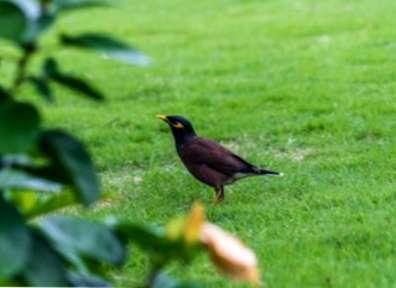 obrázky, pokud ptáci