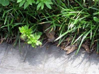 Identifizieren Von Mausschäden Im Garten