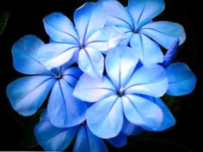 Download 630 Gambar Bunga Yg Berwarna Biru Paling Cantik