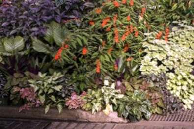 Tropical Shade Gardening Ideas So Erstellen Sie Einen Tropischen